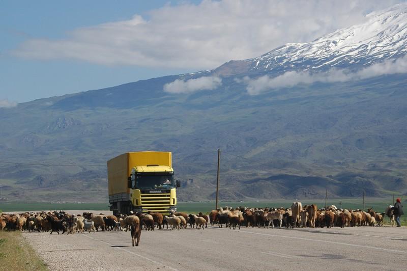 Ararat Traffic Jam