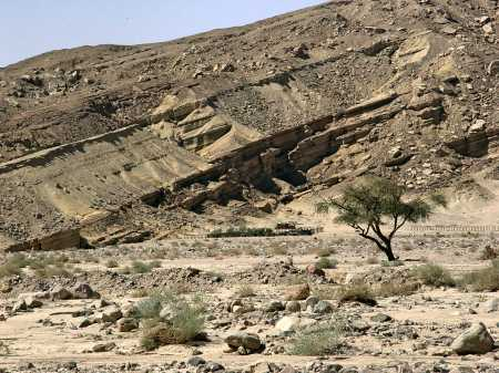 Shrubs in the Desert of Sinai. Photo by Leon Mauldin.