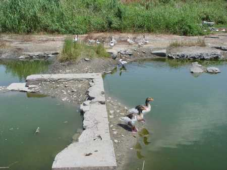Ducks at ruins of Artemis Temple in Ephesus. Photo by Leon Mauldin.