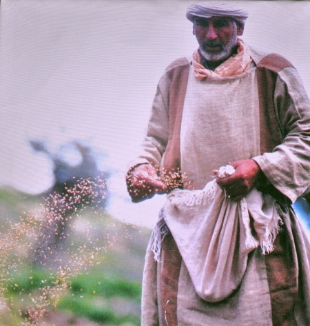 Photo at Nazareth Village. A sower sowing seed.