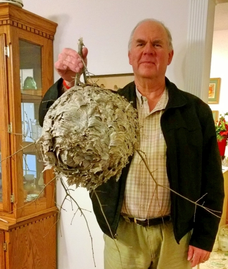 Hornet's nest. Photo by Linda Mauldin.