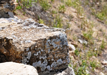 Gecko at Hierapolis. Photo by Leon Mauldin.