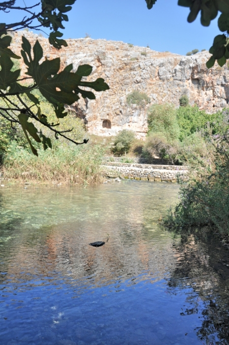 Banias River, a major source of the Jordan. Photo ©Leon Mauldin.
